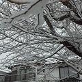 Photos: 白銀の朝