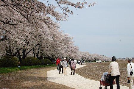桜キレイだったね