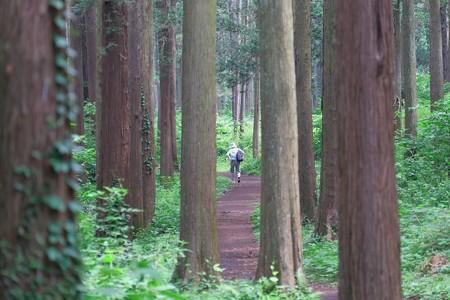 2014.07.03 追分市民の森 森道