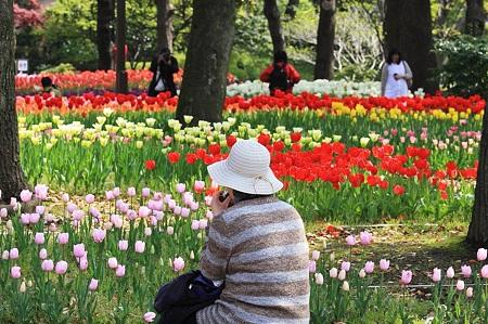 2010.04.19 横浜公園 チューリップ祭り お弁当