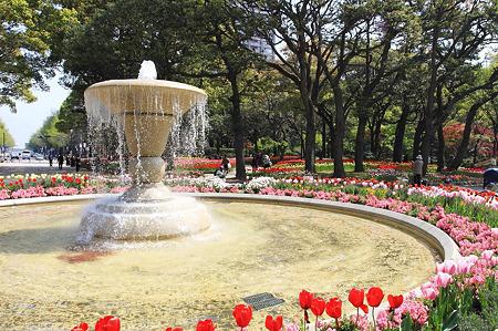2010.04.19 横浜公園 チューリップ祭り 噴水から日本大通り