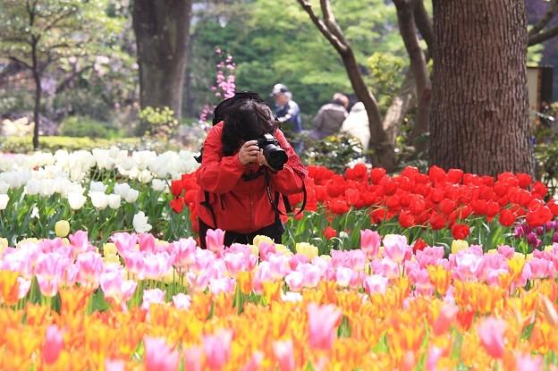 2010.04.19 横浜公園 チューリップ祭り 夢中