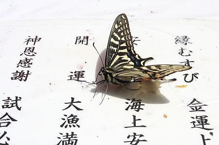 2010.04.29 伏見稲荷大社 アゲハチョウ