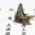 写真: 2010.04.29 伏見稲荷大社 アゲハチョウ