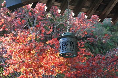 2010.11.29 鎌倉 海蔵寺 吊り灯籠と紅葉