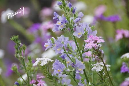 夏のお花畑で・・1