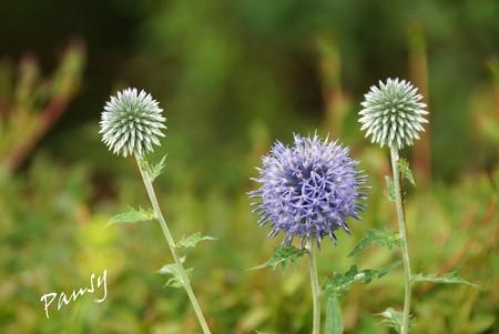 夏のお花畑で・・2