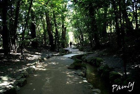 緑陰の道・・