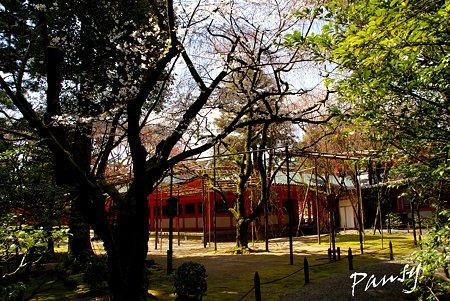 平安神宮神苑にて・・9