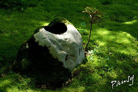 苔の庭・・