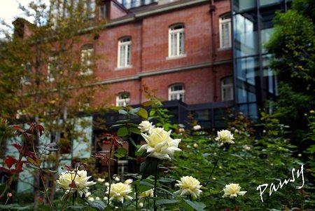 白い薔薇と・・ブリックスクエア・・2