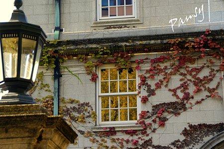 秋彩の窓・・