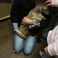 Photos: 希望者さんに抱っこされる莉乃ちん