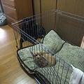 Photos: 先住ワンちゃん達