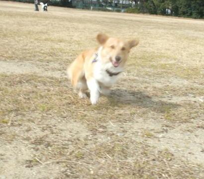 走ってくる。