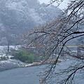 写真: 桜と久慈川と雪の小だるま岩