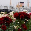 Photos: バラに囲まれる横浜/氷川丸!(6/2)