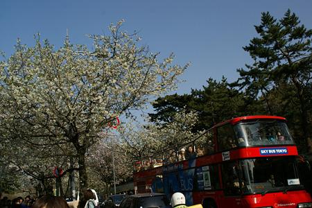 バスから桜の花見!(100403)
