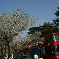 Photos: バスから桜の花見!(100403)