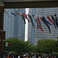 Photos: ビル街にも鯉のぼり!