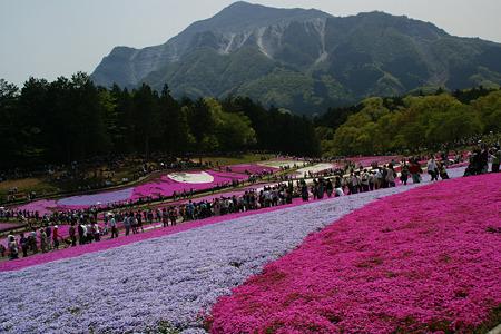 芝桜のジュータン3!(100504)
