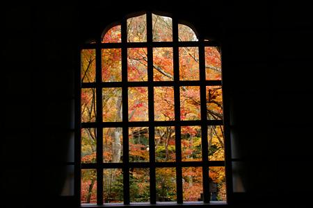 花頭窓からモミジ風景!(101123)