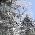 写真: 100317-54樹氷