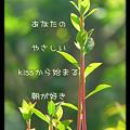 Photos: 朝のkiss