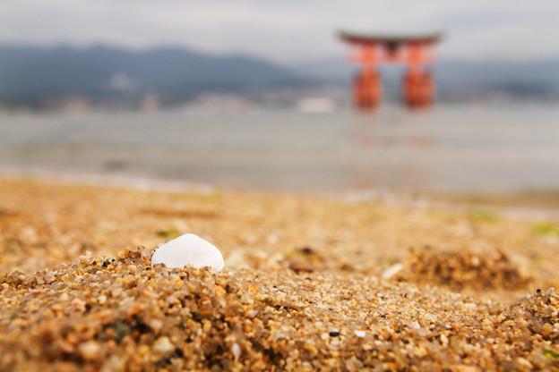 写真: 浜と鳥居