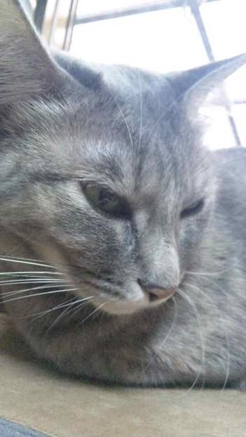 Photos: お天気悪くて猫も動きがない...