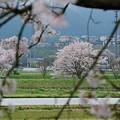 Photos: 丹波篠山・花曇り