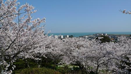 白野江植物公園(1)