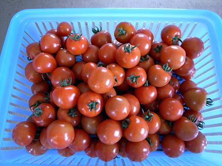 フルティカ収穫
