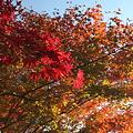 写真: IMG_9883京都の紅葉_2010年11月