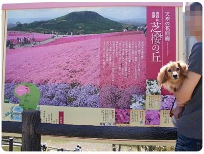 20120528 芝桜の丘