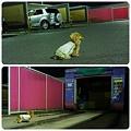 20120610 夜のお散歩