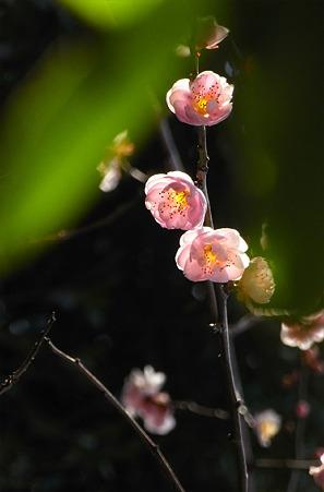 葉の間の春