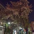 Photos: 日常桜7