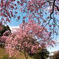 Photos: 足羽山
