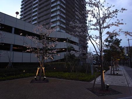 南千住の桜 2010-4-3 02