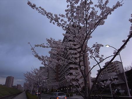 南千住の桜 2010-4-3 13