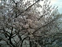 写真: お花見散歩♪