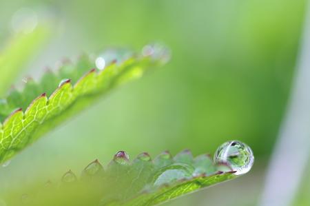 緑の贈り物