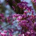 写真: 華やかな春