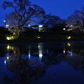 写真: 小湊鉄道の桜 2010 13