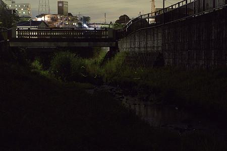 宝来橋のホタル 01