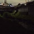 写真: 宝来橋のホタル 01