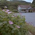 写真: 秋の小湊鉄道2010 04